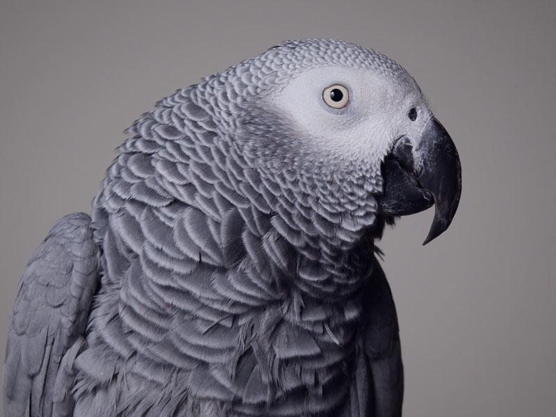 home_animals_photo3